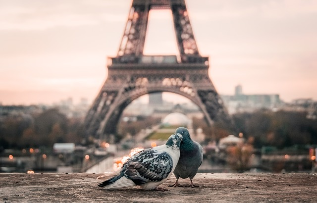Pigeons Kissing With Eiffel Tower In The Background
